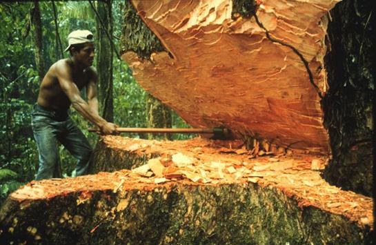 Kişi kəsdiyi ağacın altında qalaraq ölüb